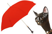 Pasotti Red Cat Umbrella